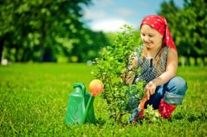 Aroniapflanzen setzen