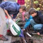 Aronia-Pflanzen für Montessorischule Dresden