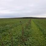 Größte Bio-Aronia-Plantage von Deutschland entsteht