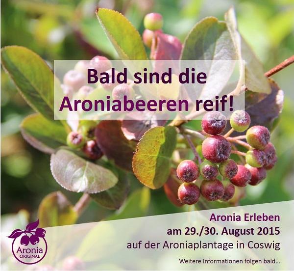 Aronia Erleben Fest am 29./30. August 2015 auf der Aroniaplantage in Coswig