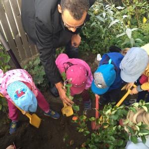 Die Kindergartenkinder halfen kräftig mit bei der Pflanzaktion von zwei Aroniasträuchern. Mit dabei war auch Aronia ORIGINAL Geschäftsführer Markus Kerres