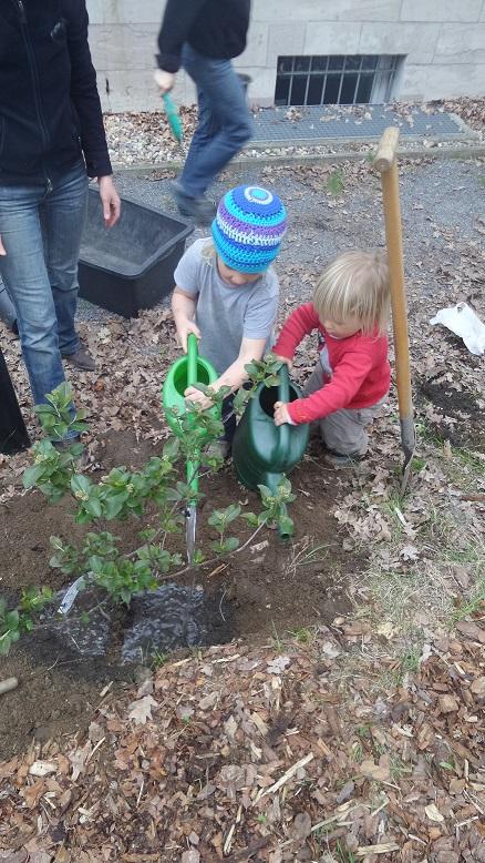 Aronia-einpflanzen-schule