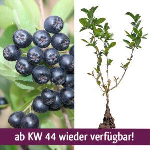 PF020 ab KW44