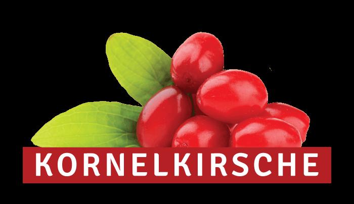 Kornelkirsche – heimische Frucht neu entdeckt