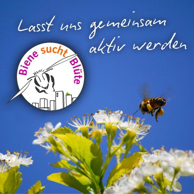 Wir spenden 10% unserer Einnahmen an Biene sucht Blüte und unterstützen damit regionale Projekte zum Bienen- und Insektenschutz. Machen Sie mit!